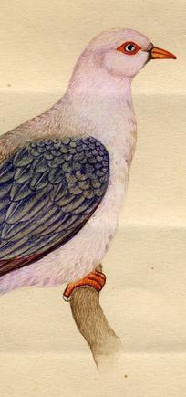 http://lenarevenko.com/blog/files/03-birds2.jpg